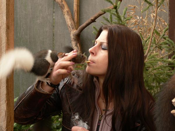 Eichhörnchen ... einfach traumhafte Tiere !