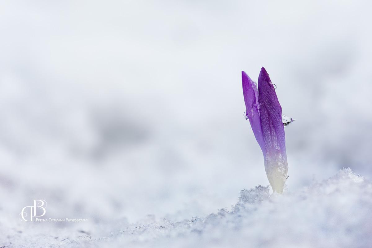 Im Schneebett