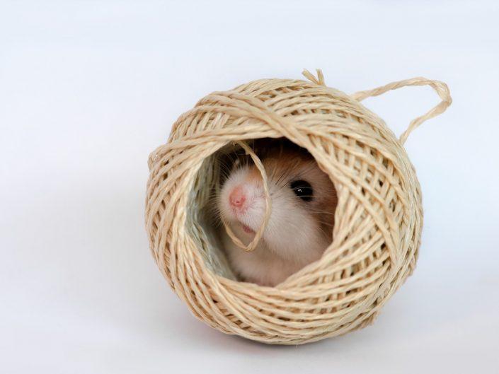 HamsterMania