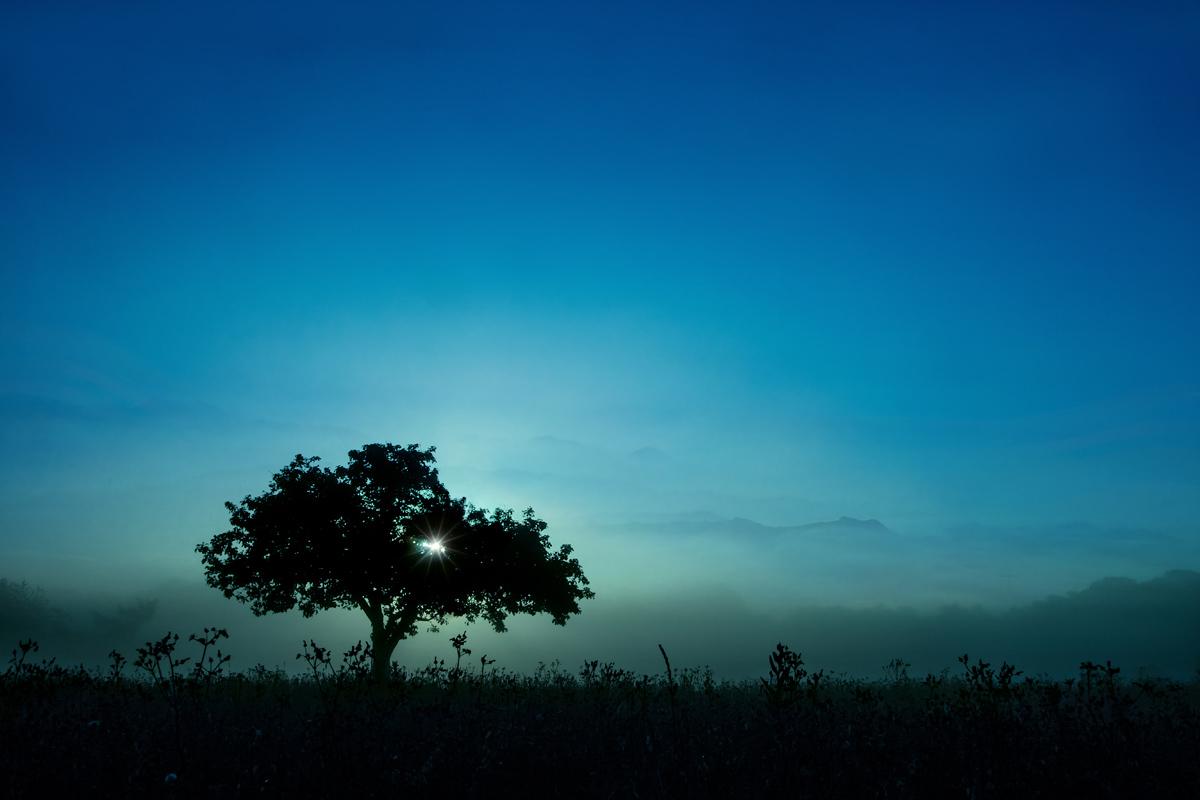 blue_fin