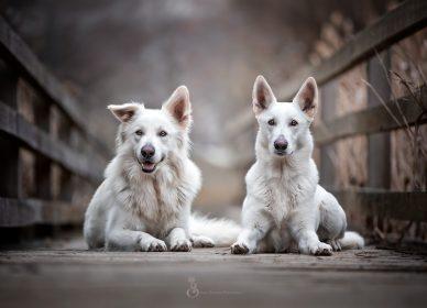 Hunde Naturburschen