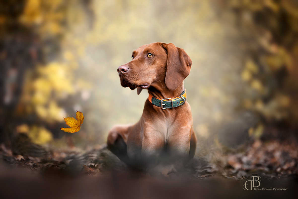 Umgeben von Herbstlaub