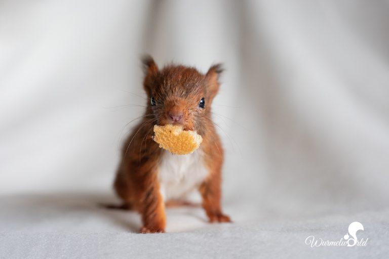 Bibi das Eichhörnchenfindelkind