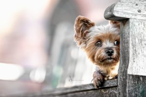 Read more about the article Fotowalk mit Wuff – in Bensheim