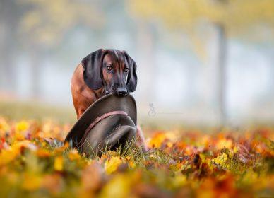Hunde Naturburschen II