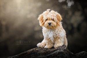 Vom Jungspund zum Junghund