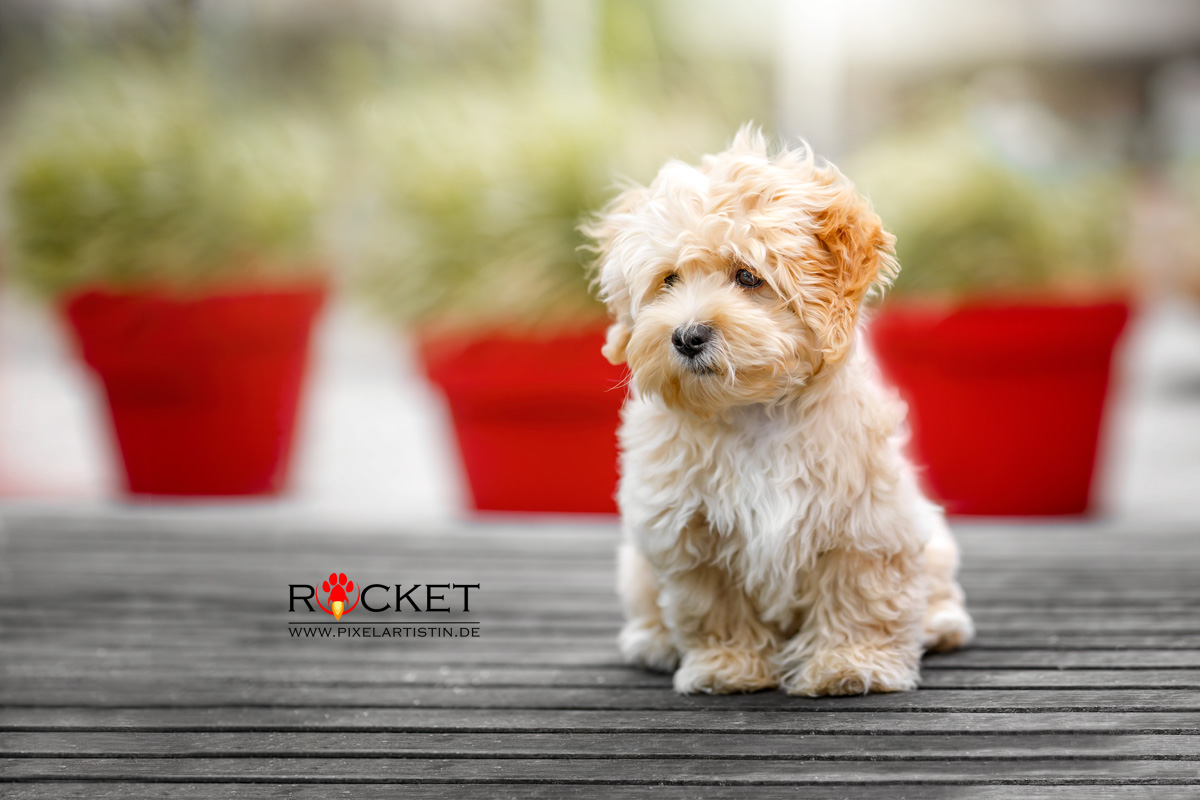 rocket-b_1224_web