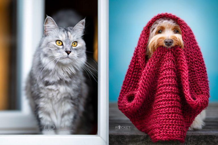 Hund vs. Katze