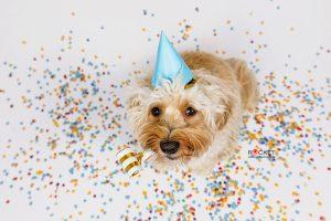 Happy Dog – Happy New Year