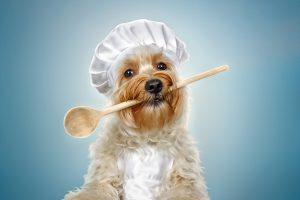Kochen für Hunde – so machst du dein Hundefutter selbst