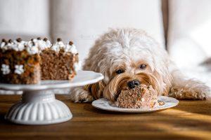Geburtstagstorte für Hunde
