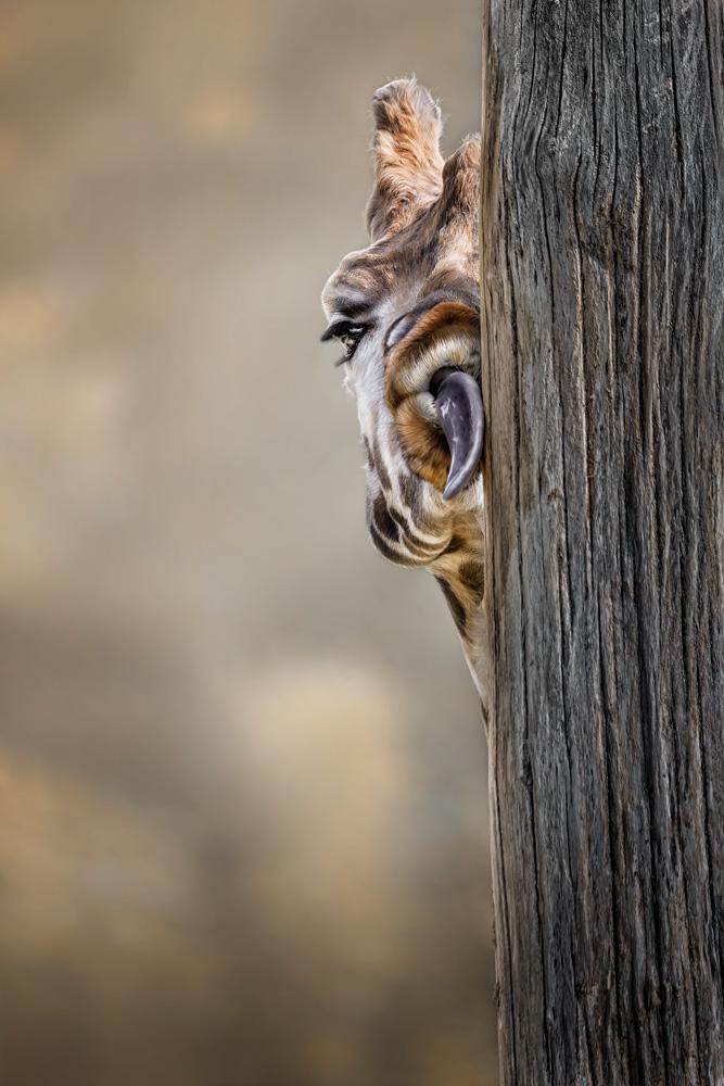 Pet van Schleck_web