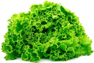 salat_web